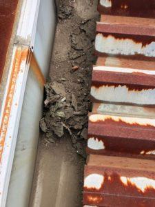 折半屋根 箱樋 ゴミ清掃