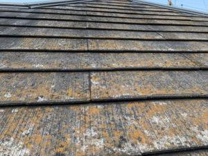 屋根 化粧スレート 劣化 カビ