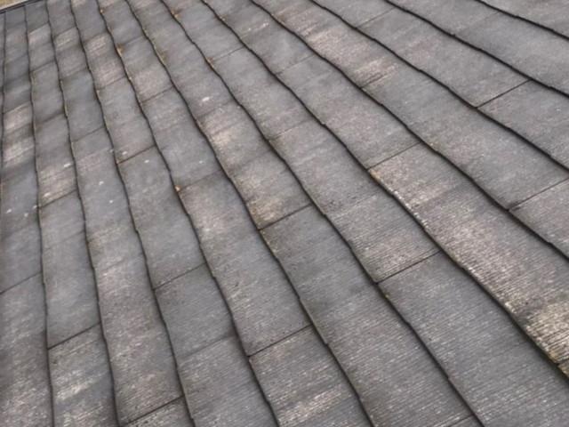 カビや苔の屋根